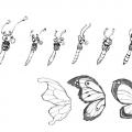 penelope_09_butterflies